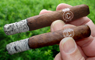 Lucky7's Delicias 1st Ash (Natural on top)