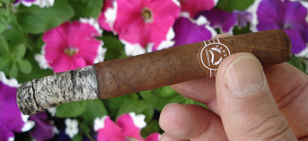 Lucky7's Londres Maduro - 1st Ash