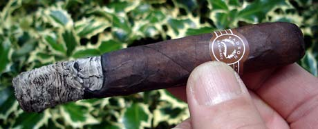 Lucky7's 2000 Maduro Ash
