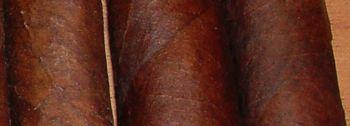 maddie-or-corojo